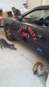 Pafosmietzcats