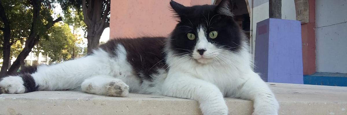 Katze beim Tierarzt Banner